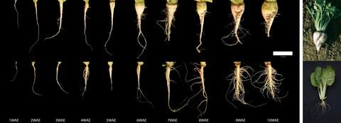 storage root