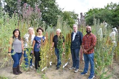 Quinoa Versuch 2018